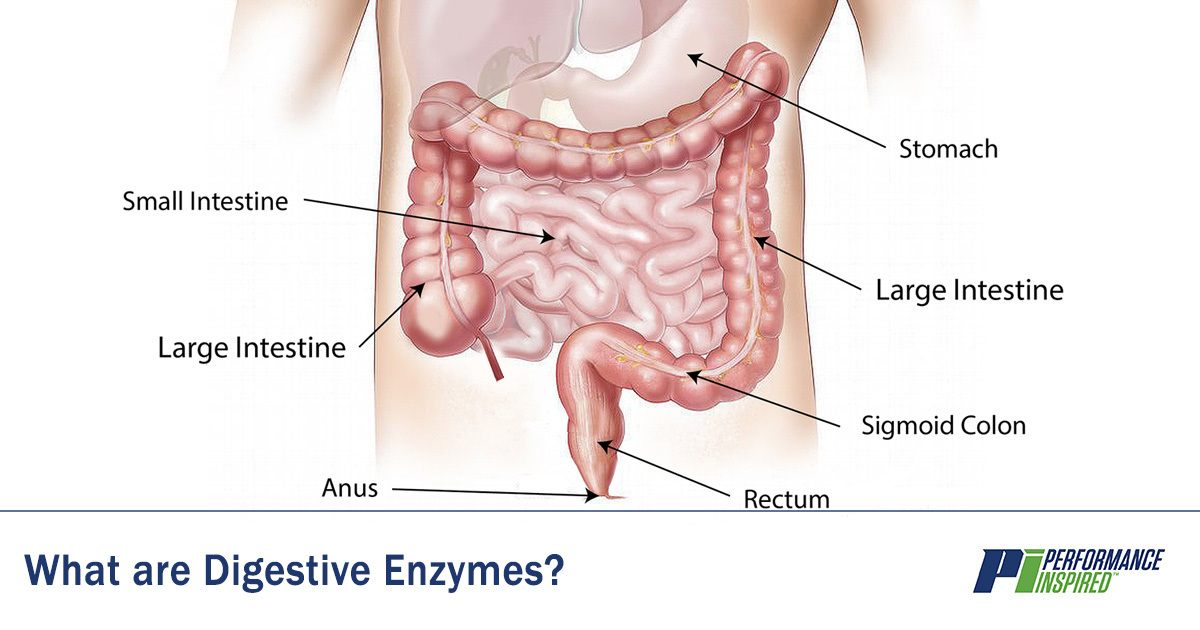 Define What Are Digestive Enzymes Performance Inspired Nutrition